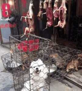 cruelty_janeunchained_china_dog_meat_dogmeat_velezmitchell_jerrybrown_hollywood_yulin