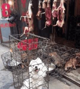 cruelty_janeunchained_china_dog_meat_dogmeat_velezmitchell_jerrybrown_hollywood_yulin