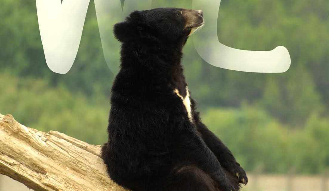 Victory! 2016 Florida Bear Hunt Stopped!