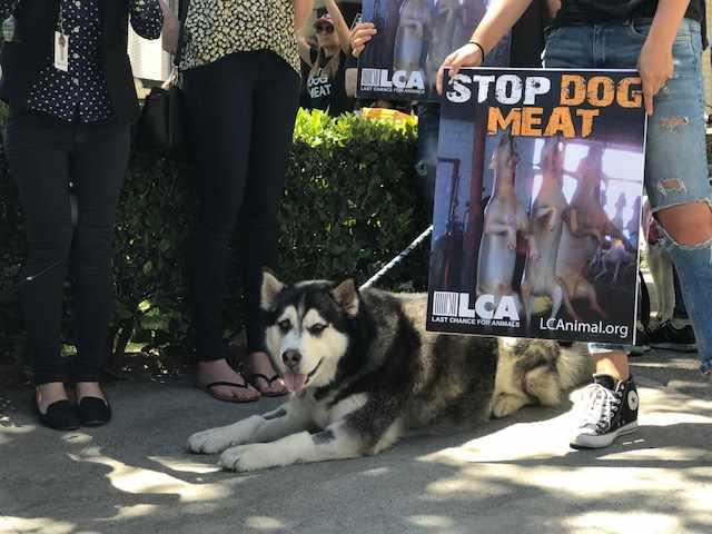 dog protest