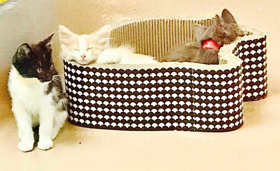 Alison Eastwood Chiesta kittens adoption