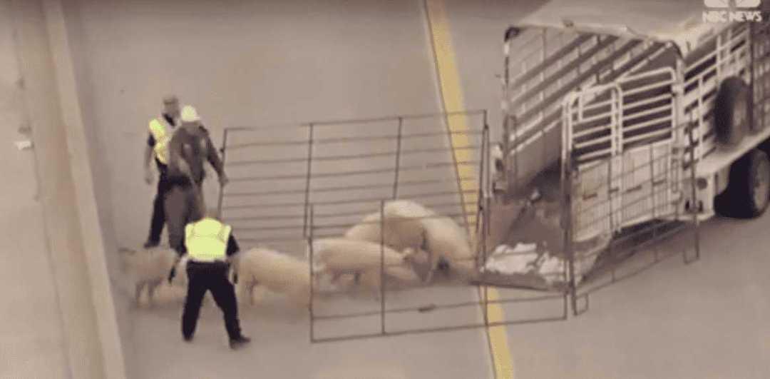 Dallas Animal Save 3