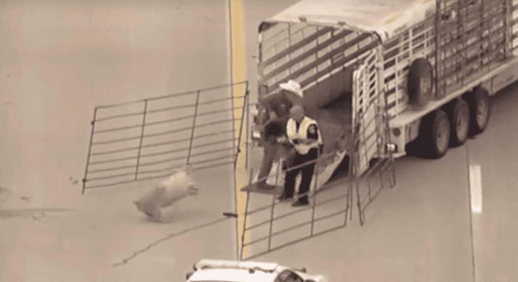 Dallas Animal Save 9