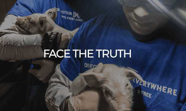 Animal Rights Group Protests Costco Over Supplier's Pig Treatment with Virtual Reality Tools!