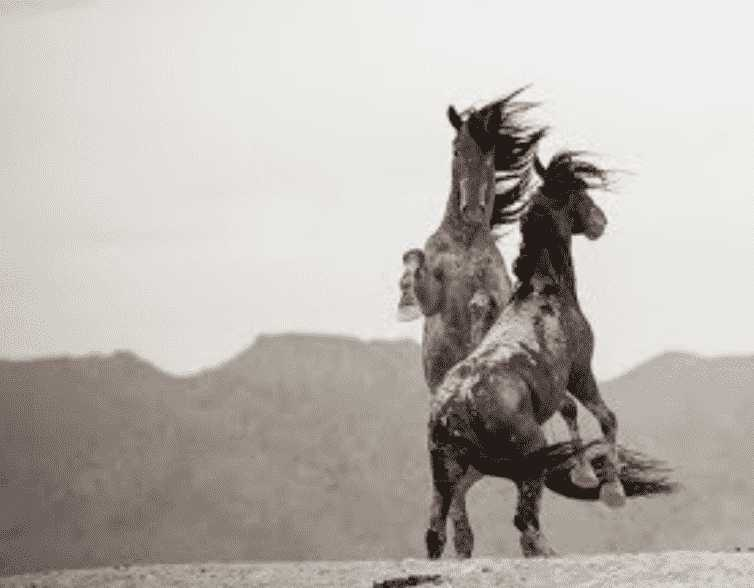 Speak Up Now for Wild Horses under Threat from Ag/Cattle Industry!