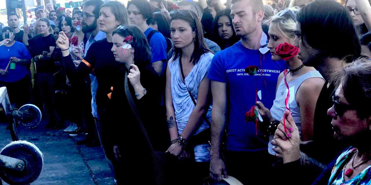 Hundreds Sing for Animals Killed for…