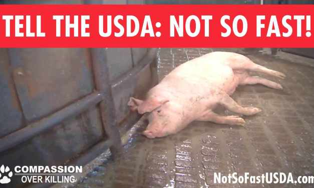 Help Stop High Speed Slaughter!!!