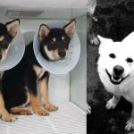 URGENT!!! Dog Meat Survivors Need Your Help!!!