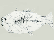 Fossil Fish 1 August 2017 - Copy