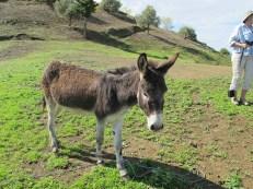 The potter's donkey, a prized possession