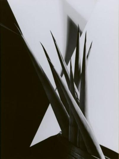 agave-design-i-1920s-by-imogen-cunningham-bhc1276