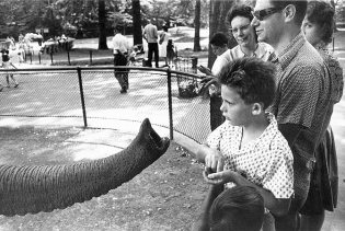 winogrand-animals-18