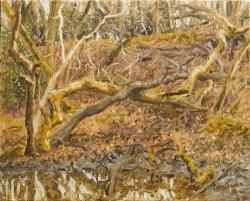 'Woodland Bog' (2016), oil on linen, 40 x 50 cm