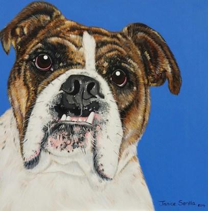 Carlos the Bull dog