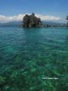 apo island 7465 copyright