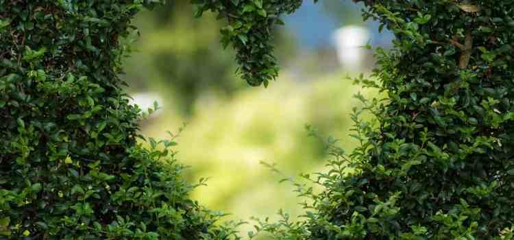 Urvertrauen-das erste und wertvollste Geschenk