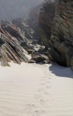 Heath Goanna prints, Rocky River Beach, Flinders Chase National Park