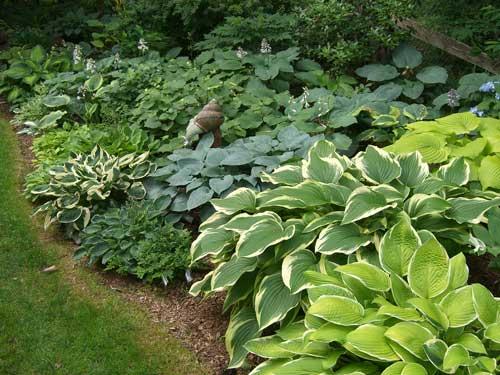 Hostas City Garden Ideas