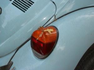 Leaf on a buggy