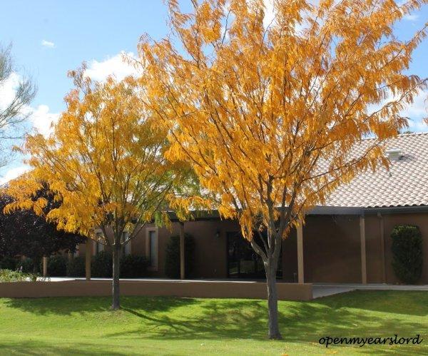 autumn-trees-signed