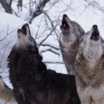 大北クリニック松永先生直伝!喉を開いて高い声を出す効果的な練習法