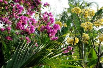 a Twoje zmysły będą mamione przez intensywny, wręcz narkotyczny zapach kwiatów…