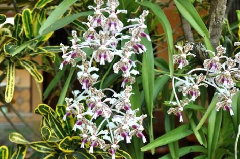 Ostatni kącik zieleni: coś orchideowatego?