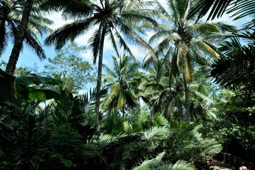 Zmiana tematu: przerzuciliśmy się w okolicę Lumadżang. Wchodzimy w dżungiel.