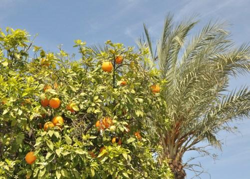 ... i palmy z pomarańczami ;)