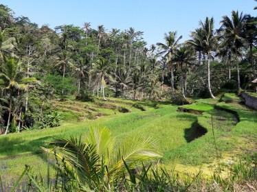 A to, gdyby ktoś się jeszcze zastanawiał, czy warto polecieć na Bali ;)
