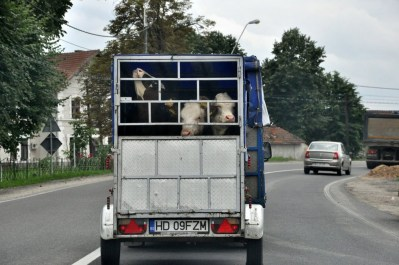Kolejne z serii: zdjęcie z drogi.