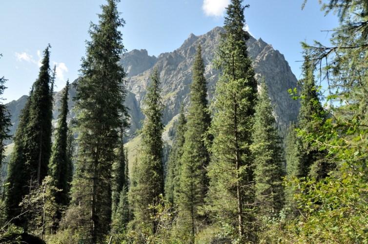 Kurgak Tor zaczyna się gęstym, ciemnym lasem, na szczęście szybko można wybić się poza jego granicę.