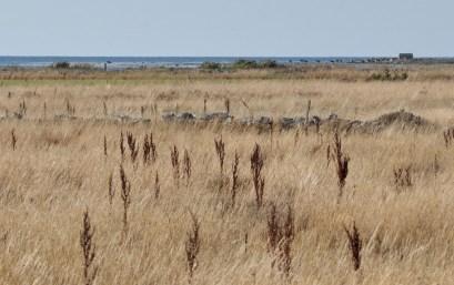 Step, murki odgradzające pastwiska, krowy, morze.
