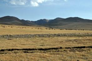 Okolice Song Kol to największy region pasterski w Kirgistanie.