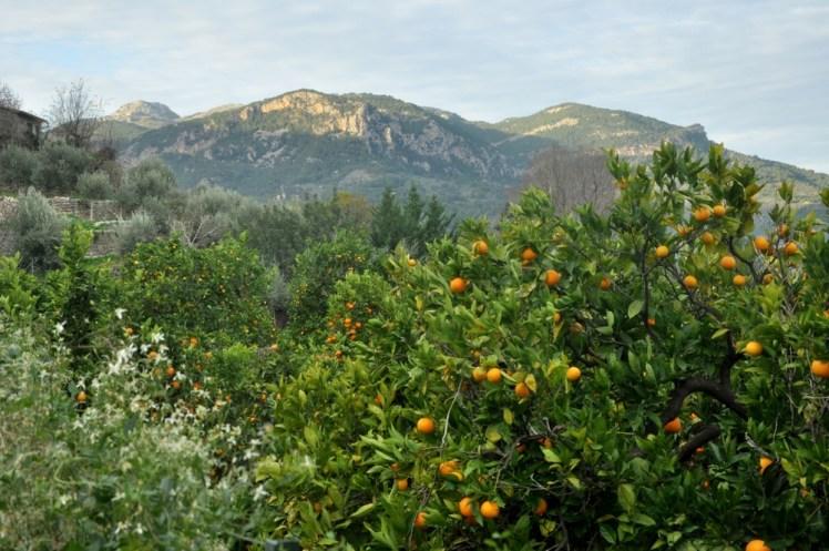 Z pomarańczowych sadów w Biniaraitx startujemy w góry.