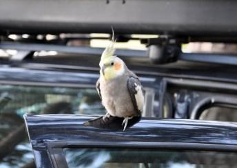 Na campsicie byliśmy tylko my i papuga. Papuga fajna, dopóki...