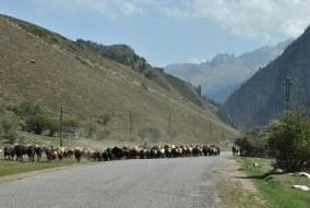 Z Karakolu podjechaliśmy między innymi do doliny Dżeti Oguz.