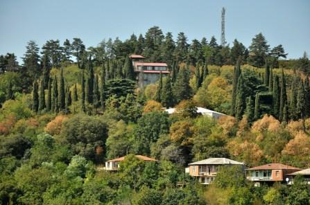 Cyprysy! Ulubione drzewa Zibiego ;)