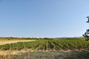 Kachetia - region winem płynący.