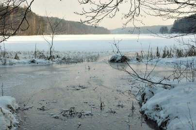 Jezioro Dąbrowskie koło Gołubia.