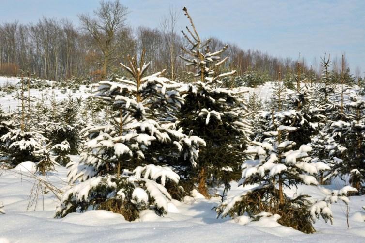 """Miastowy dopadł zimę, czyli seria """"śnieg na drzewach"""" do bólu :)"""