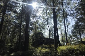 Poszliśmy w las...