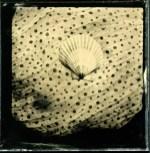 Seeshell, 6x6 cm, Hasselblad, 2013