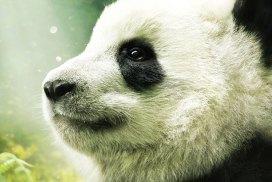 panda documentary