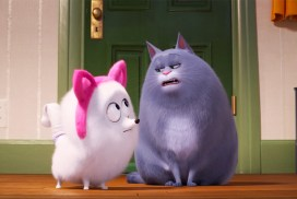 funny cat movies