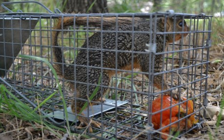 Squirrel and Tomato (2) (1280x805)