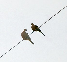 for the birds (6)