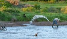 Man dipping water