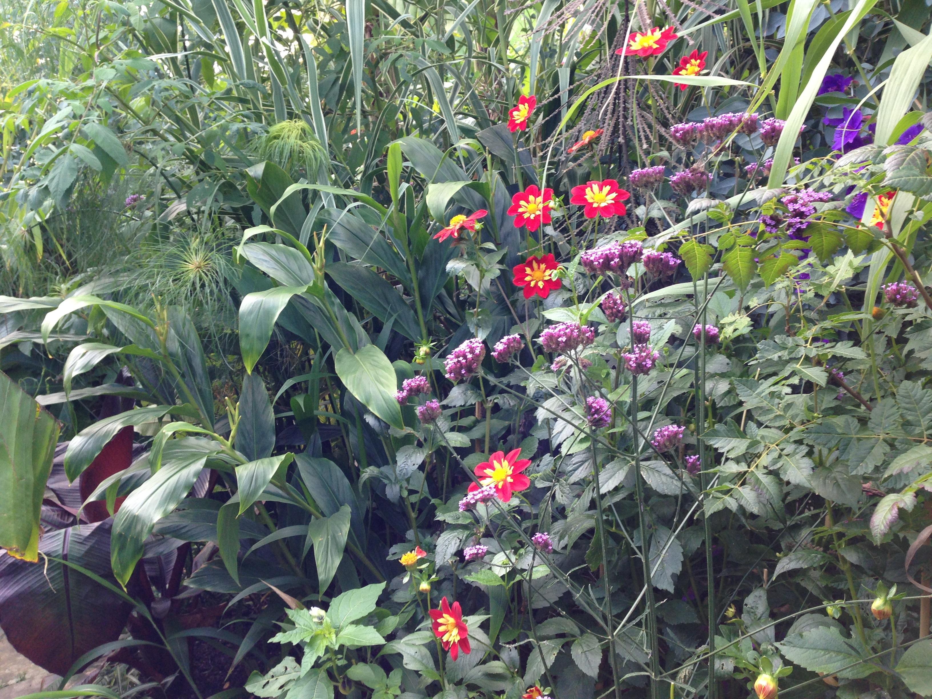 Autumn In Subtropical England – Janna Schreier Garden Design