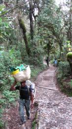På vej op gennem junglen